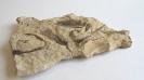Палеонтологическая находка. Кожный покров панцирной рыбы.