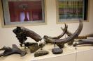 Ископаемые остатки мамонта