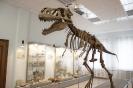 Тарбозавр-слепок. Пустыня Гоби  (Монголия)